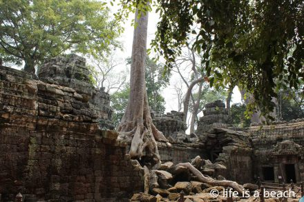 Ta Prohm - life is a beach