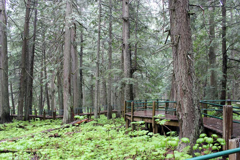 Hemlock Grove Boardwalk